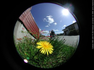 fisheye_flower